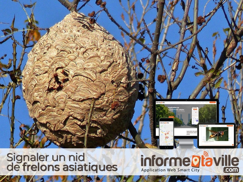 Signaler un nid de frelons asiatiques